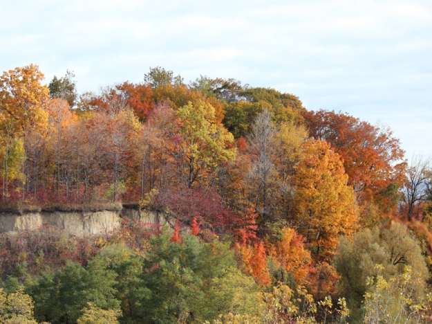 Scarborough Bluffs Park Fall Colours