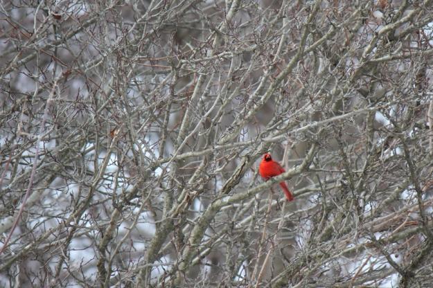 Cardinal Wilket Creek Park