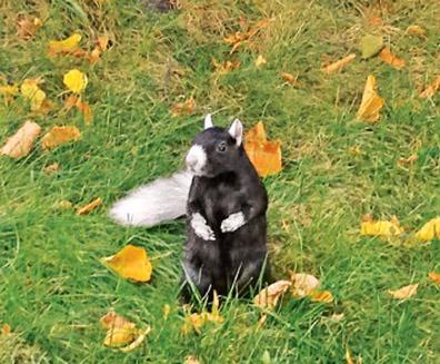 Tuxedo the squirrel