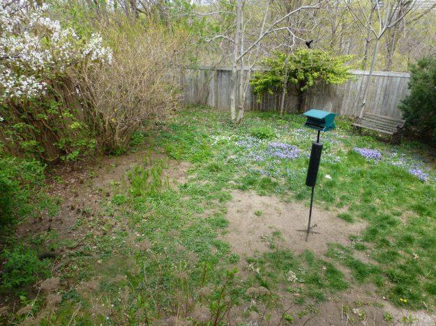 backyard-01