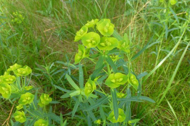 leafy-2