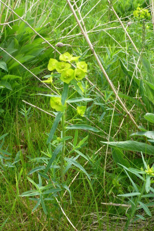 leafy-4