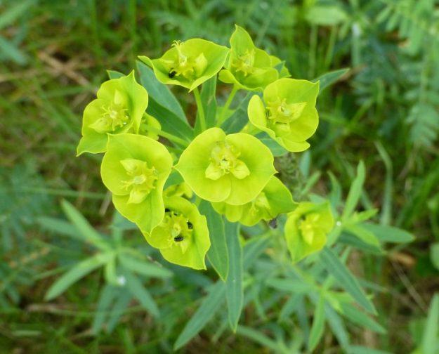 leafy-6
