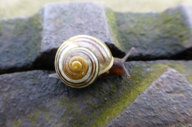 snail-44