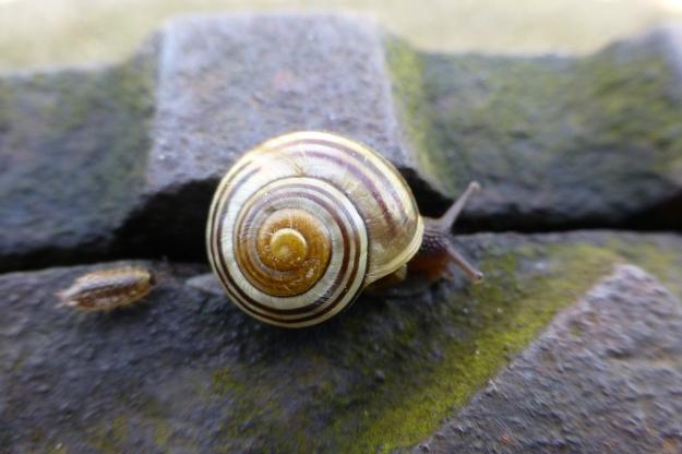 snail-45