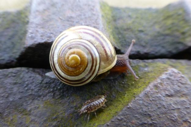 snail-47