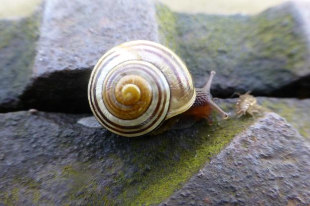 snail-50
