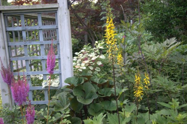 White Japanese Knotweed with Astilbe and Ligularia