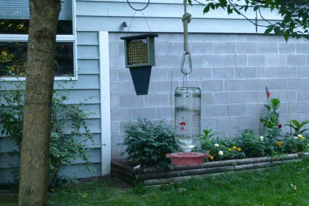Hummingbird Feeder #3 and Suet Feeder #1