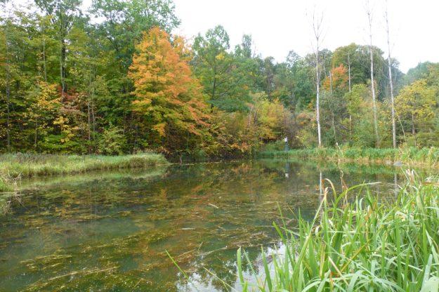 creek-9