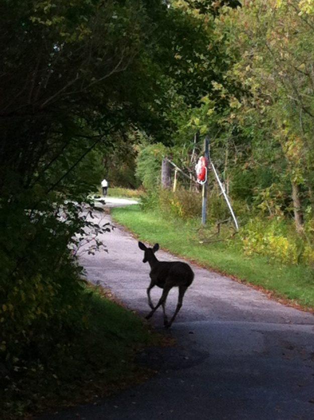 White-tailed Deer (Photo: Pam Stevens)